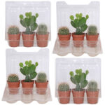cactus-mini-4-pack