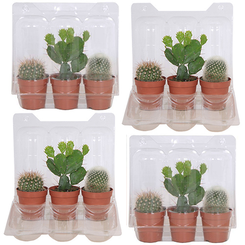 cactus mini 4-pack