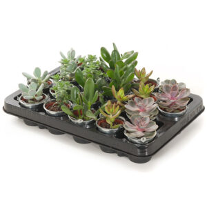 mini vetplantjes 20 pack