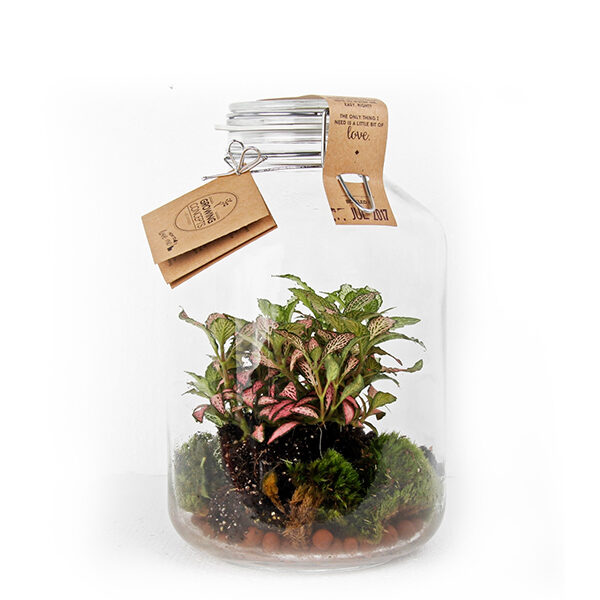 weckpot-fittonia-diy_1