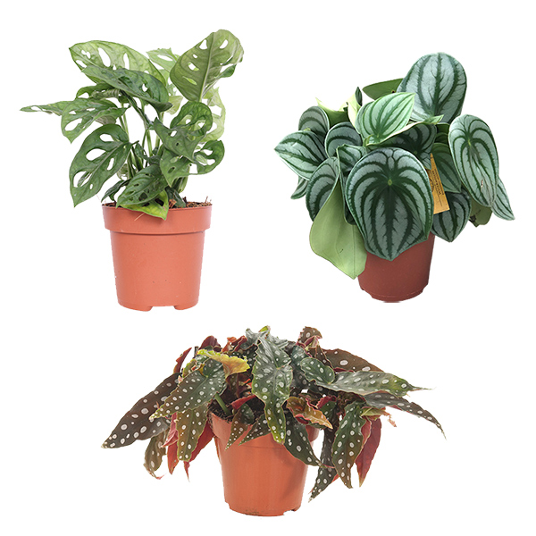 Botanical Package Deal (3-pack)