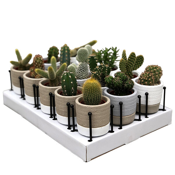 mini-cactus-fashion-pot_en_staander