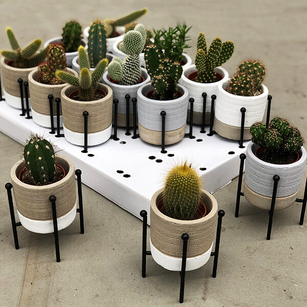 mini-cactus-fashion-pot_en_staander-sfeer