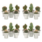 cactus-mini-zink-20pack