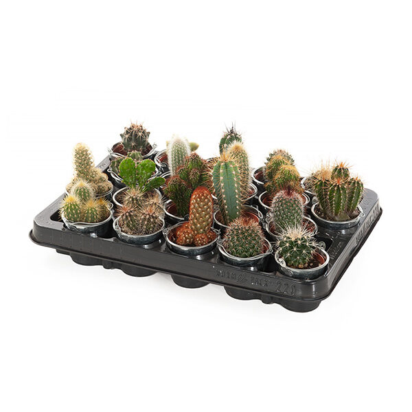 cactus-mini-zink-20pack_1