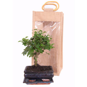 bonsai in giftbag