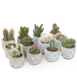 Cactus-MIX-in-beton-star-sierpot-12_pack