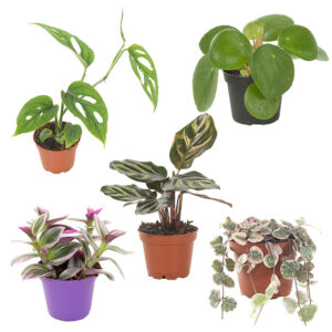 Mini urban jungle 5 pack
